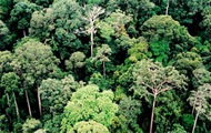 In tropical forests, tall trees measuring 50 meters are surrounded by mixed clusters of about 1,500 smaller trees. Forest development depends on the growth of the dominant trees. If they are healthy, their followers will also grow well.
