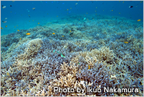 Global Coral Reef Conservation Project (Okinawa, Midway Atoll, Republic of Seychelles)